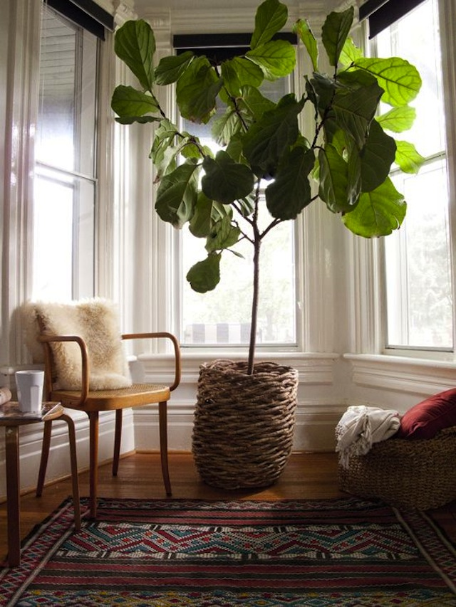 Best-Indoor-Containers