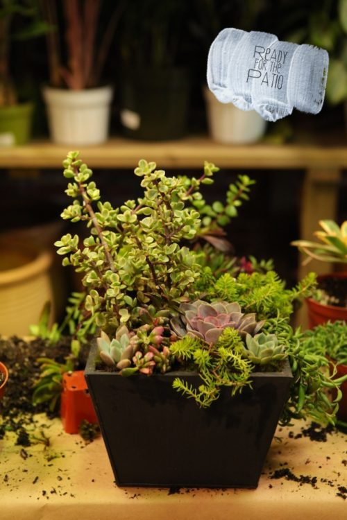 Succulents Final