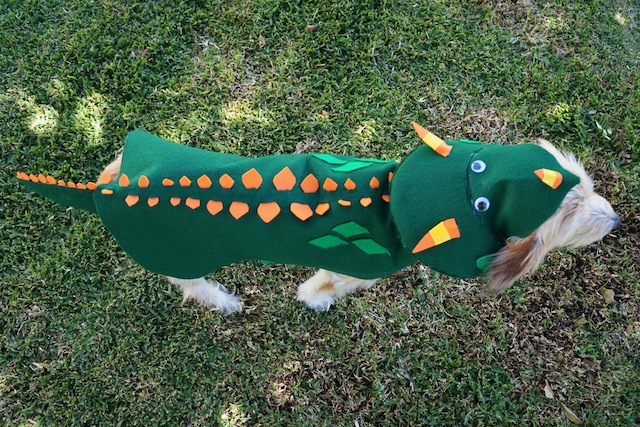 The Halloween dog costume decorated as a dinosaur