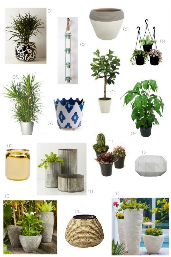 Indoor Plants + Containers