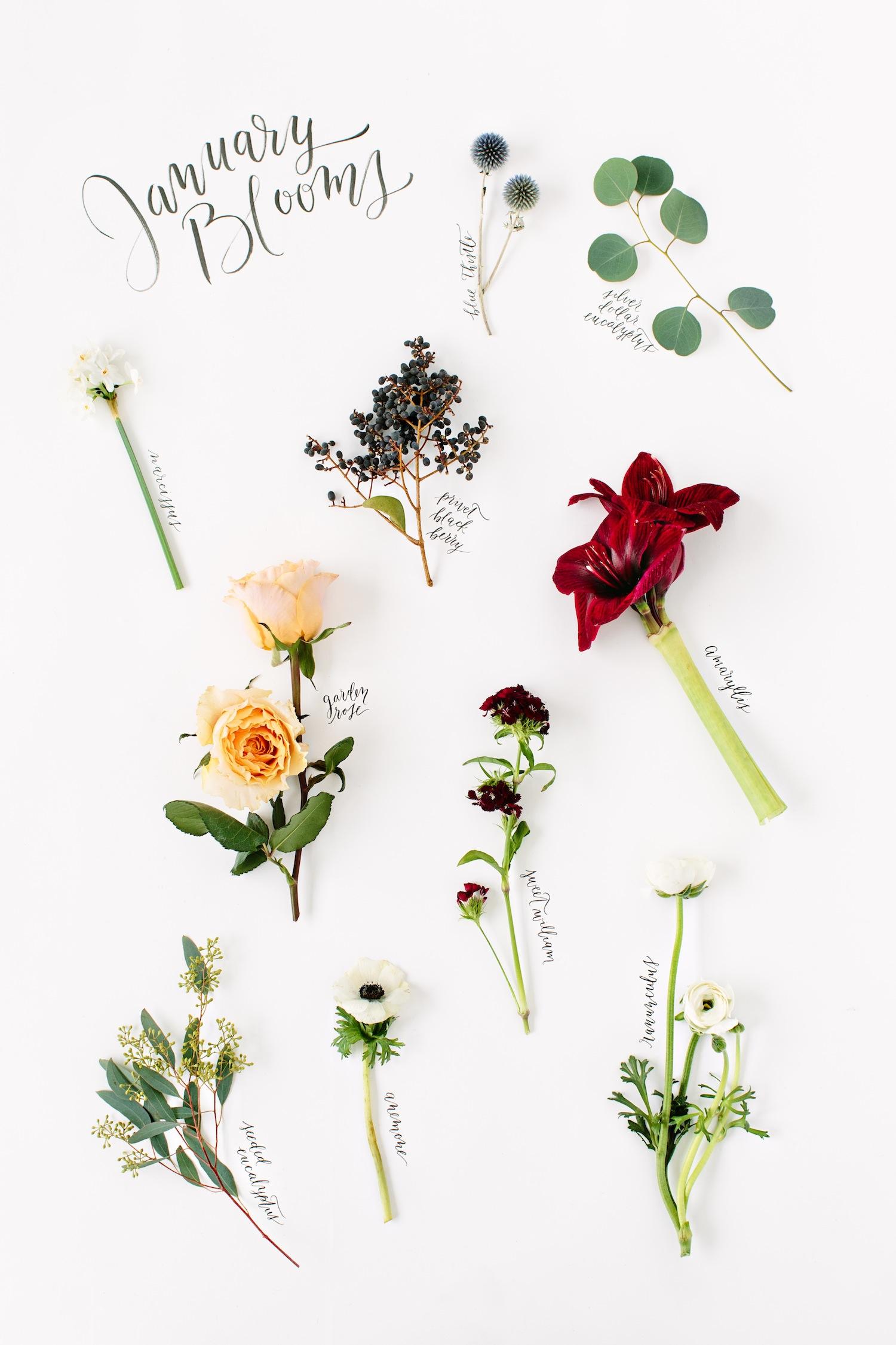 flowers-in-bloom-in-january-2