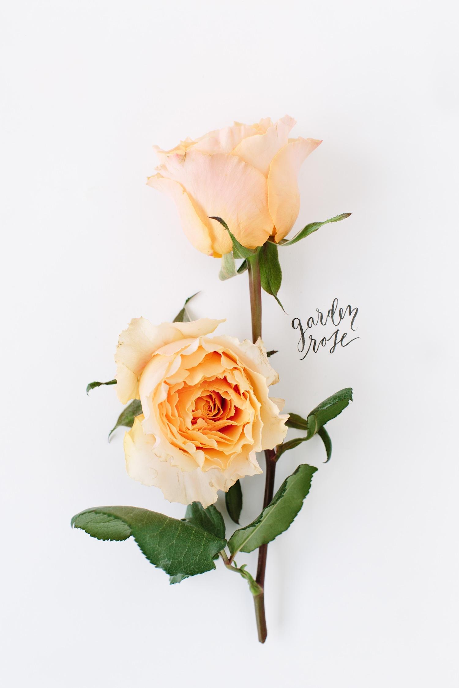 flowers-in-bloom-in-january-4