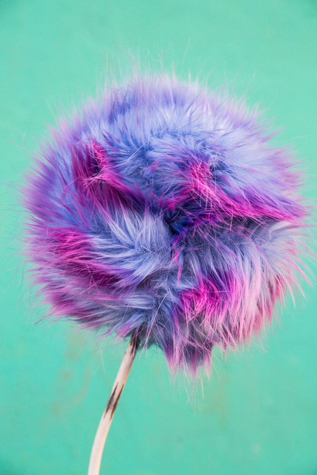 A pink and blue pom pom