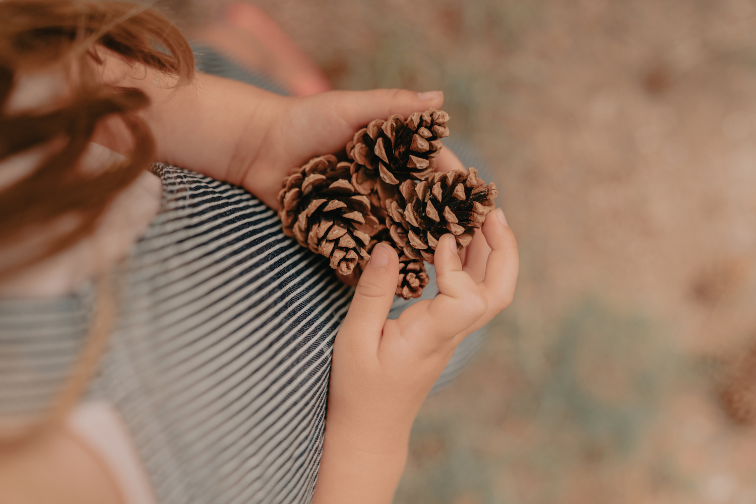 A girl holding pine cones in her hands