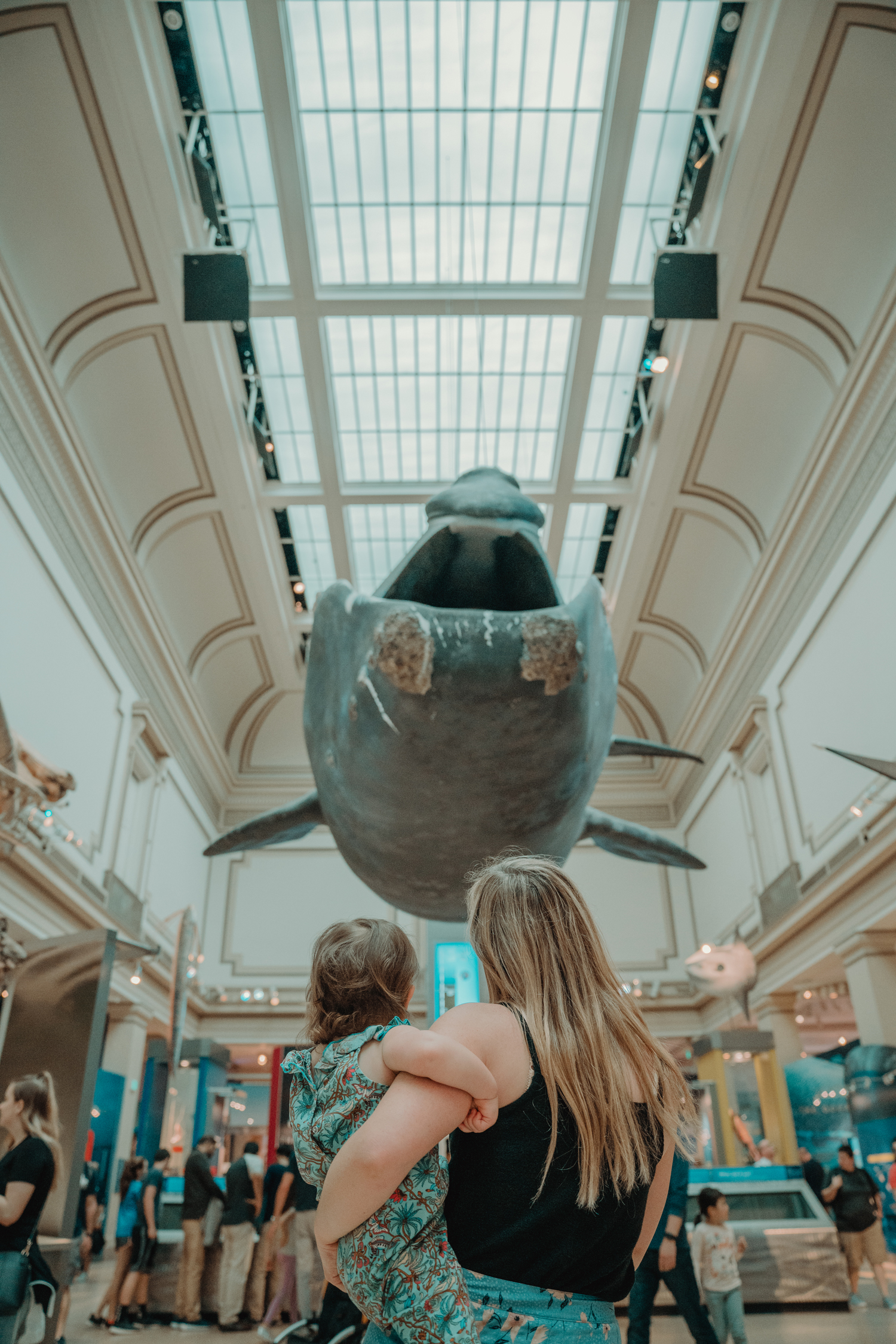 whale in museum