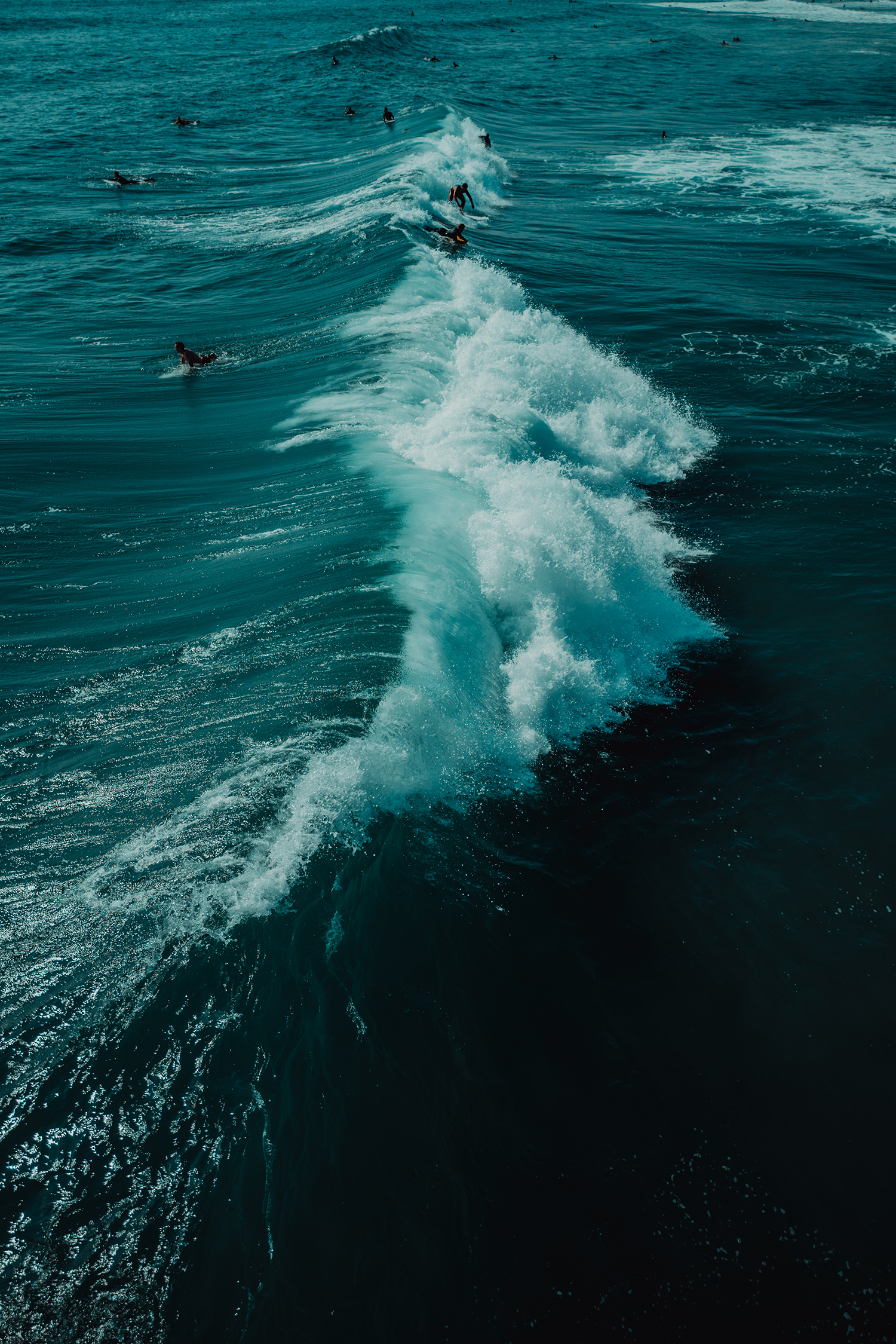 Surfers in the ocean